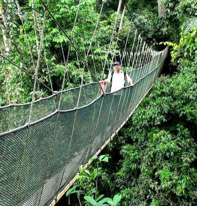 Canopy Walk at Poring Hot Spring