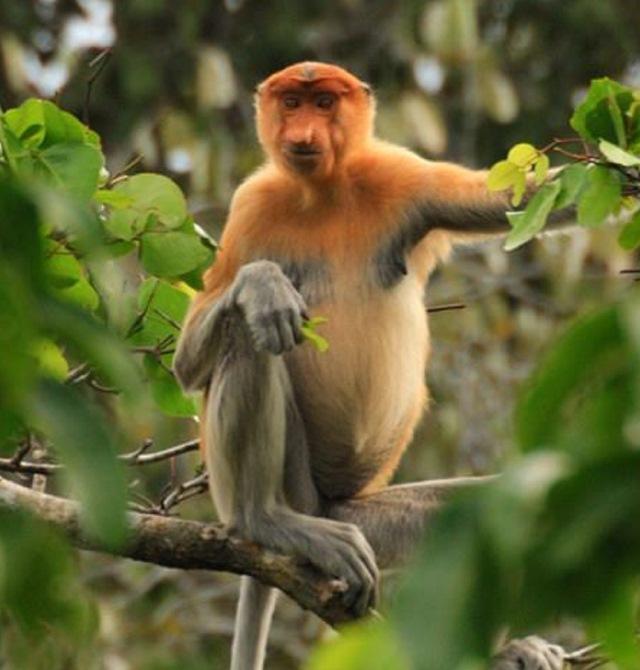 Monkey Top River Safari Monkey Tree