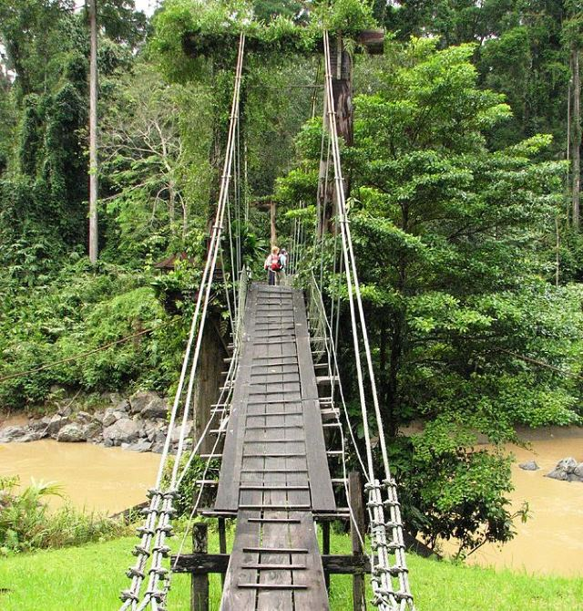 The_bridge_to_the_rainforest